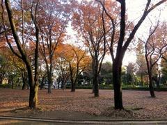 塚山公園1.jpg