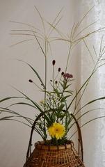 秋の花.jpg