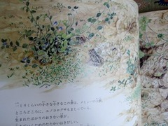 雑草のくらし6.jpg
